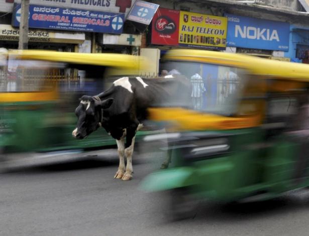 Uma vaca no meio de uma rua movimentada com auto-riquixás passando em Bengaluru, na Índia