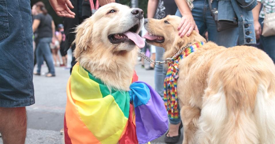 7.jun.2015 - Participante fantasiou também os cães para a 19ª edição da Parada Gay de São Paulo que acontece neste domingo (7), na avenida Paulista, região central de São Paulo. O tema deste ano é