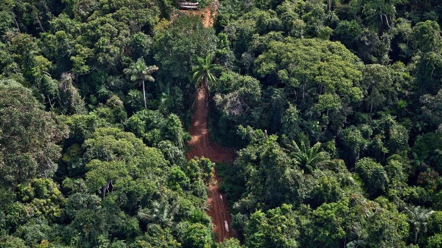 Greenpeace flagra ramais para transporte de toras em Uruará (PA). A investigação revelou superestimação de árvores para obter licença para extrair madeira no local - Rogério Assis/Greenpeace