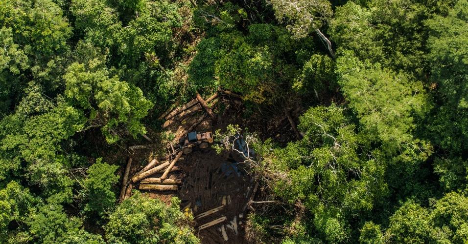 9.jun.2015 - Trator em área de manejo florestal da Fazenda Agropecuária Santa Efigênia, situada no município de Uruará (PA), derruba árvores durante período de embargo. O plano de manejo florestal da empresa superestimou a presença de ipê no inventário florestal da área em 1.300% a mais do que a média encontrada, obtendo uma licença para retirar cerca de 600 caminhões de madeira ilegal. Após denúncia do Greenpeace, a empresa foi multada e o plano foi suspenso. A imagem foi feita em 30 de março de 2015