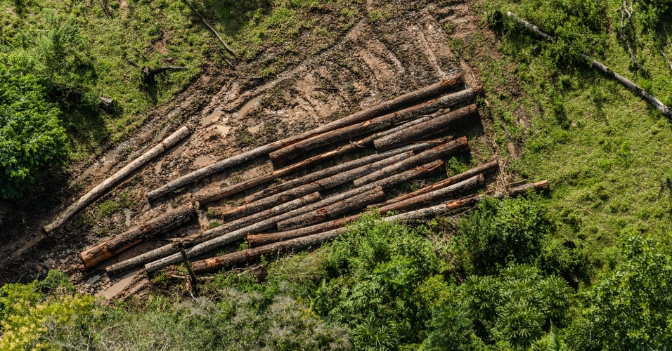 9.jun.2015 - Uma investigação do Greenpeace flagrou toras estocadas e empilhadas na terra indígena Cachoeira Seca, no Pará, onde a extração de madeira é ilegal. Licenças oficiais obtidas através de inventários florestais fraudados, isto é, que indicam uma presença maior de árvores como o ipê na região, permitem a legalização e a comercialização destas madeiras. A imagem foi feita em 30 de março de 2015