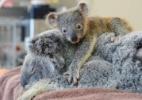Dilvulgação/Facebook/Australia Zoo Wildlife Warriors