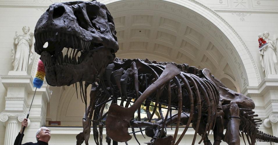 11.jun.2015 - O geólogo Bill Simpson usa um espanador para limpar o fóssil de Tyrannosaurus rex de 67 milhões de anos conhecido como