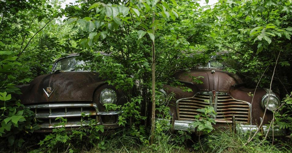 16.jun.2015 - Árvores em volta de velhos veículos em uma das maiores coleções de carros clássicos na Geórgia, EUA. O local funciona como cemitério para automóveis, mas também como paraíso para fotógrafos e amantes de carros antigos
