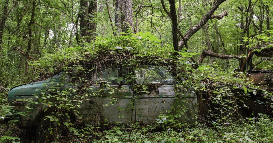 16.jun.2015 - Trepadeiras cobrem carro antigo em ferro-velho na Geórgia (EUA). O local funciona como cemitério para automóveis, mas também como paraíso para fotógrafos e amantes de carros antigos