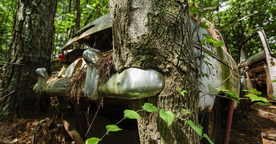 16.jun.2015 - Tronco de árvore entra na traseira de um carro na coleção de um ferro-velho na Geórgia (EUA). O local funciona como cemitério para automóveis, mas também como paraíso para fotógrafos e amantes de carros antigos
