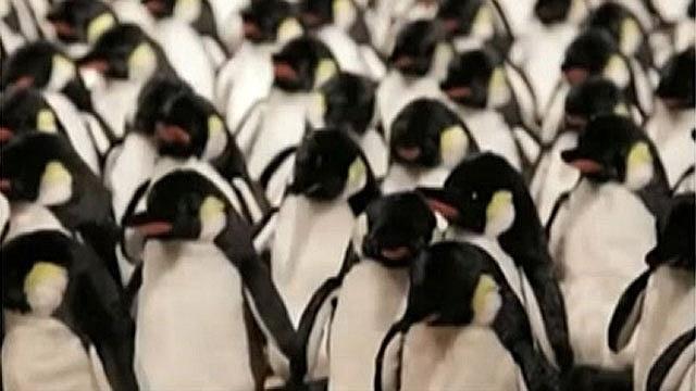 17.jun.2015 - Uma mostra em uma galeria de arte em Nova York reuniu 450 pinguins mecânicos que imitam os gestos do público, Uma câmera de vídeo captura os movimentos de uma pessoa, e os animais motorizados reproduzem com movimentos em grupo. A obra foi criada pelo artista Daniel Rozin