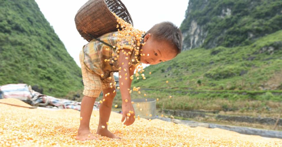 21.ago.2016 - Menino trabalha em plantação de milho durante as férias de verão no vilarejo de Nongyong, na China