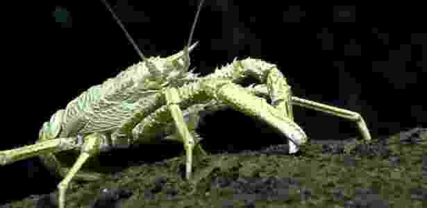 As espécies que vivem no fundo do oceano enfrentam condições extremas - BILL CHADWICK-NOAA - BILL CHADWICK-NOAA