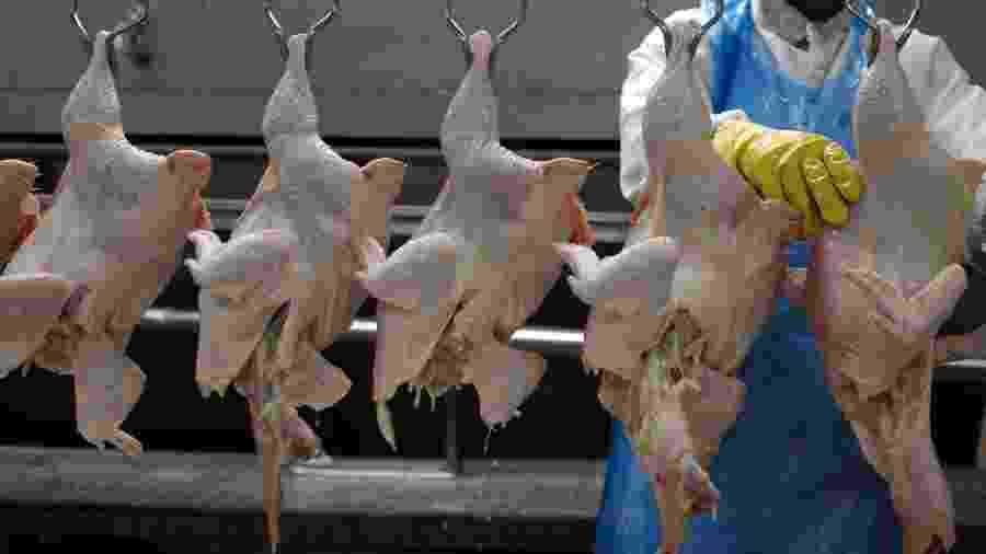 Processamento de carne de frango em frigorífico em Itatinga (SP) - Paulo Whitaker