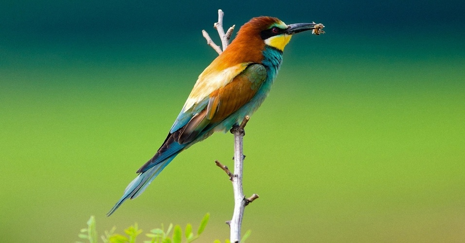 Pássaro se alimenta de inseto