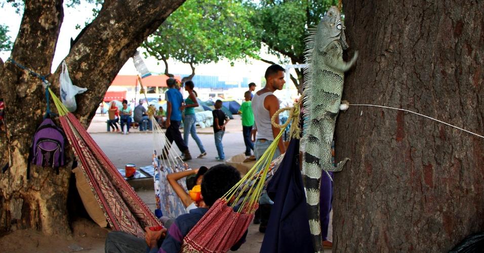 Cerca de mil venezuelanos vivem na Praça Simón Bolívar, em Boa Vista. Eles dormem em barracas de camping, em redes e até mesmo em caixas de papelão no chão