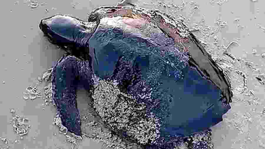 Tartaruga é encontrada coberta de óleo de origem desconhecida no litoral do Maranhão - Reuters