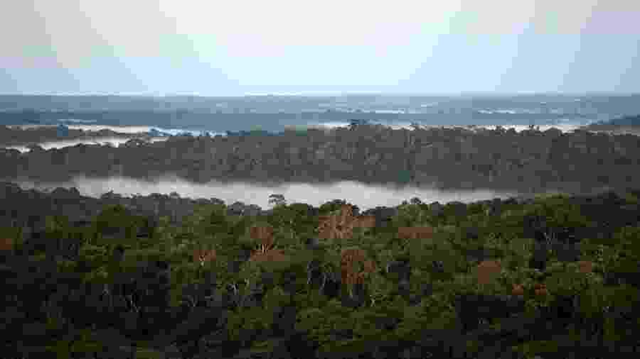 Vista da floresta amazônica em São Sebastião do Uatumã (AM) - Bruno Kelly