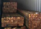 Desmontado esquema ilegal gigante de exportação de madeira da Amazônia (Foto: Divulgação)