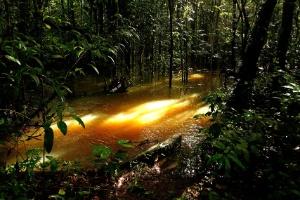 Laudo confirma vazamento de rejeitos tóxicos de mineradora no Pará (Foto: Raimundo Paccó/FramePhoto/Estadão Conteúdo)
