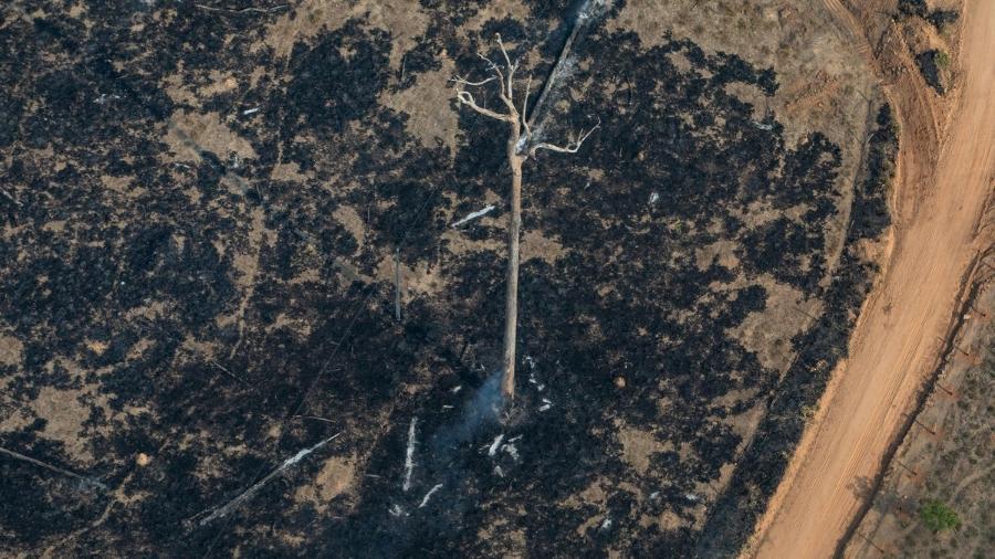 Vista aérea de áreas queimadas e focos de incêndio na Amazônia, na cidade de Nova Bandeirantes, Mato Grosso - Victor Moriyama/Greenpeace
