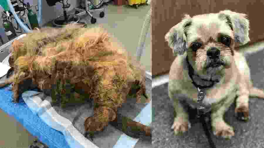 Cadela foi resgatada após não conseguir se mexer com 4kg de pelos emaranhados - Divulgação/Nebraska Humane Society