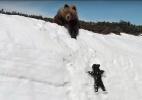 A história por trás do vídeo de ursinho tentando alcançar mãe em penhasco - Reprodução/Youtube