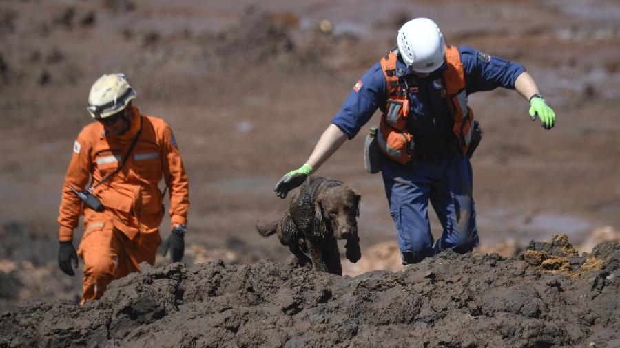 31.jan.2019 - Com cães farejadores, bombeiros continuam as buscas por corpos em Brumadinho (MG) - Mauro Pimentel / AFP