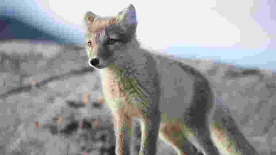Não há registros de outro animal da espécie que tenha ido tão longe em tão pouco tempo - Getty Images/BBC