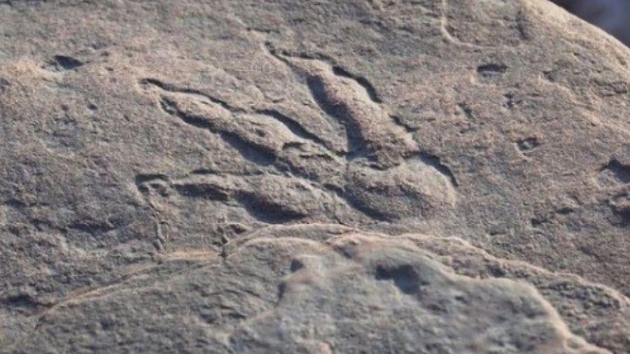 Pegada de réptil pode ter mais de 200 milhões de anos, segundo museu - Reprodução/Instagram
