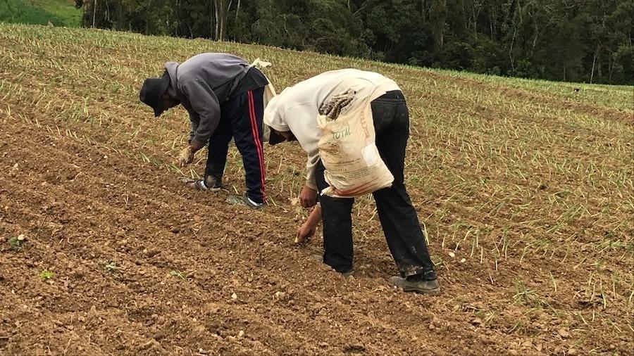 Imagem ilustrativa: Trabalhadores encontrados recebiam R$ 7,50 por mil mudas plantadas de cebola - AFT