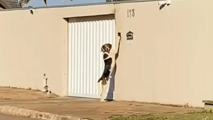 O cachorro Faísca surpreendeu os donos ao tocar a campanhia para entrar em casa; vizinha gravou vídeo que viralizou - Reprodução