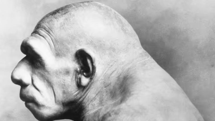 Reconstituição do Homem de Neanderthal - Museu Field de História Natural