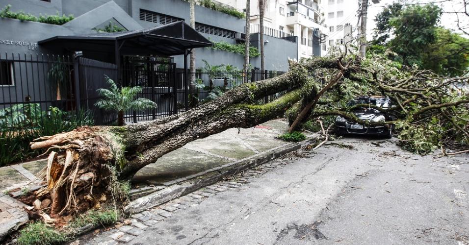 21.out.2016 - Árvore caiu em cima de um carro após fortes chuvas na rua Ourânia, Alto de Pinheiros, em São Paulo