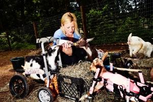 Cabras ganham espaço entre os pets e viram celebridades das redes sociais (Foto: Amy Lombard/The New York Times)
