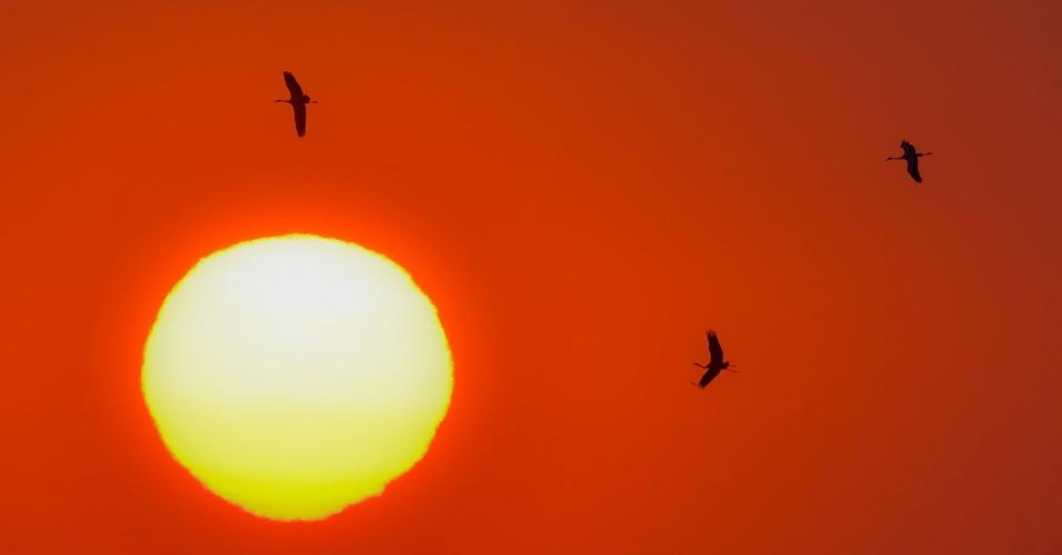 16.set.2016 - Garças voam ao nascer do sol perto da aldeia de Bending em Brandenburg, na Alemanha