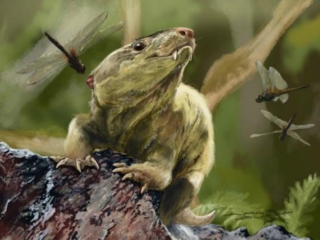 29.set.2016 - NOSSOS ANCESTRAIS? - Duas novas espécies de cinodontes brasileiros podem ajudar a traçar a evolução dos mamíferos, segundo estudo de Agustín Martinelle, da Universidade Federal do Rio Grande do Sul, publicado na revista PLOS. Todos os mamíferos modernos, incluindo humanos, evoluíram a partir de um ancestral comum com os cinodontes, répteis que viveram há 260 milhões de anos. As novas espécies, Bonacynodon schultzi (reproduzido na imagem) e Santacruzgnathus abdalai, ajudarão os pesquisadores a elucidar como os cinodontes evoluíram e deram origem aos mamíferos