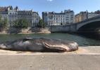 Como uma baleia apareceu encalhada na beira do rio Sena, em Paris? (Foto: Reprodução/Twitter)