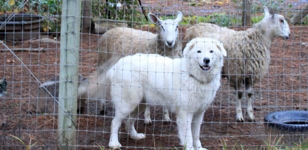 Imagem de um dos cães do casal Karen Szewc e John Updegraff - Facebook/ Karen Szewc