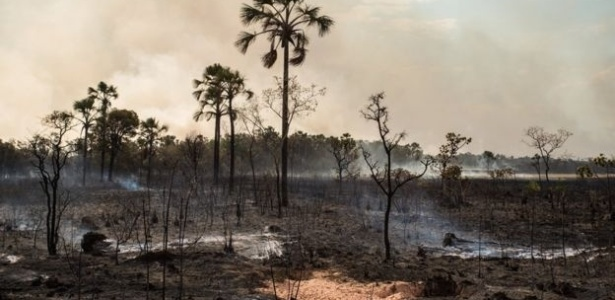 Chefe do Parque da Chapada dos Veadeiros diz que incêndio foi criminoso