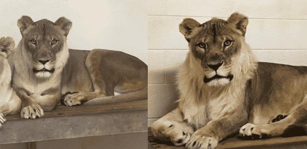 Reprodução/Facebook/Oklahoma City Zoo and Botanical Garden