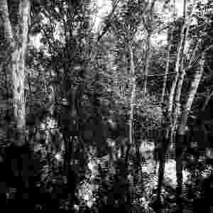 """Para realizar seu projeto """"Água"""", o fotógrafo e ambientalista Valdemir Cunha fotografou ao longo de cinco anos rios, lagos e represas pelo Brasil. O resultado do trabalho poderá ser visto nas imagens em exposição na Galeria Porão, a partir da segunda semana de novembro, e em um livro em que traça o panorama das águas no país. Na foto, a reserva sustentável de Mamirauá, no Amazonas - Valdemir Cunha"""