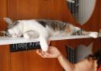 Uruguai tem hotel com tratamentos especiais para gatos - Juan Ignacio Mazzoni/Efe