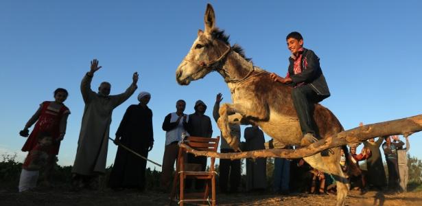 Egípcio de 14 anos ganhou plateia ao treinar burro para pular obstáculos