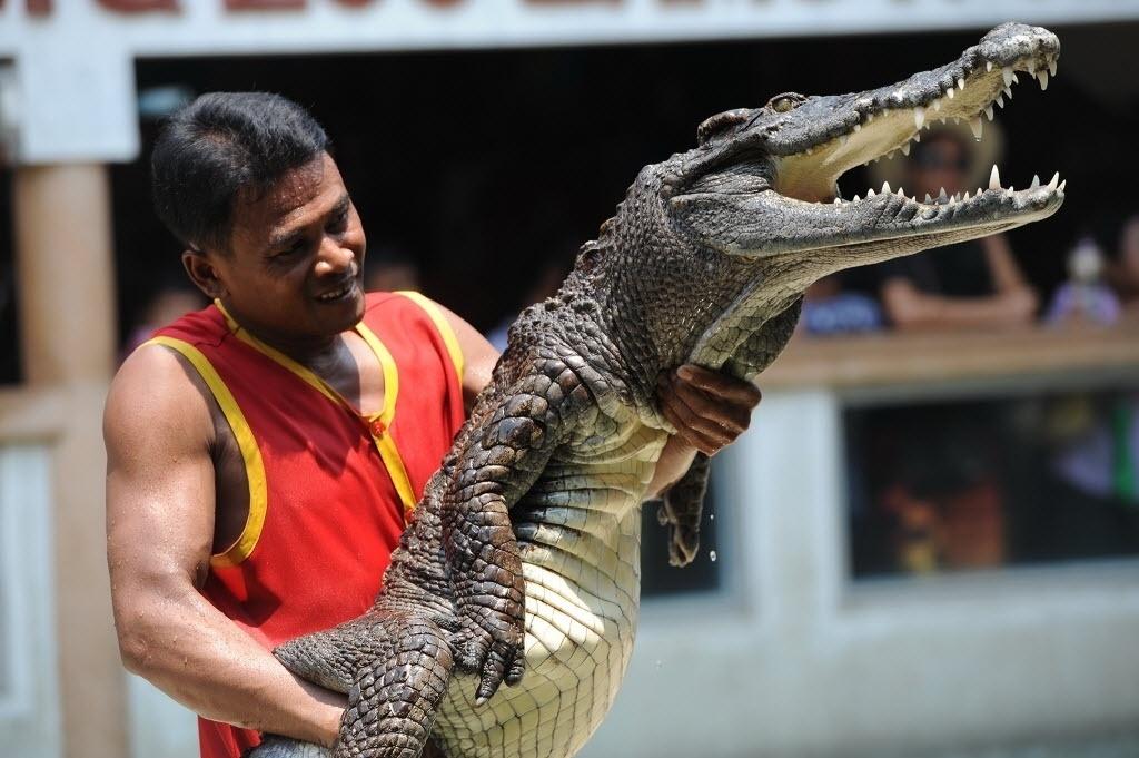 27.abr.2016 - Homem segura crocodilo durante exibição em zoológico de Bancoc, na Tailândia