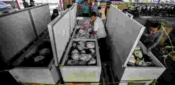 25.ago.2016 - Os pangolins estavam envoltos em plástico e conservados em cinco grandes congeladores - Juni Kriswanto/ AFP - Juni Kriswanto/ AFP