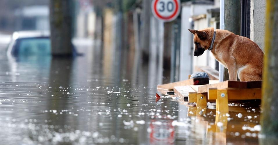 27.jan.2018 - Bairro residencial Villeneuve-Saint-Georges, em Paris, ficou alagado por causa do aumento no nível do rio Sena