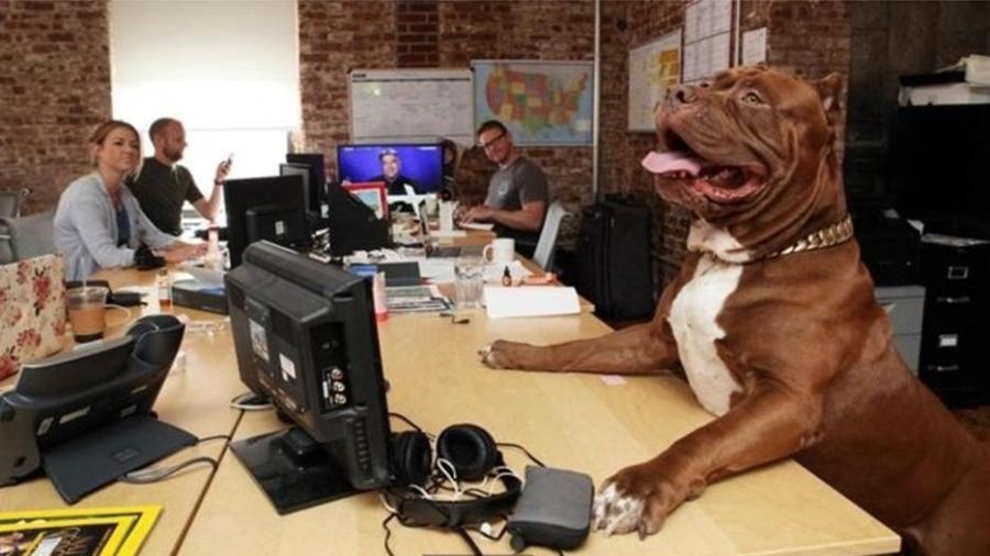 Muitas empresas de tecnologia permitem a seus funcionários trazer animais de estimação ao trabalho - Getty Images