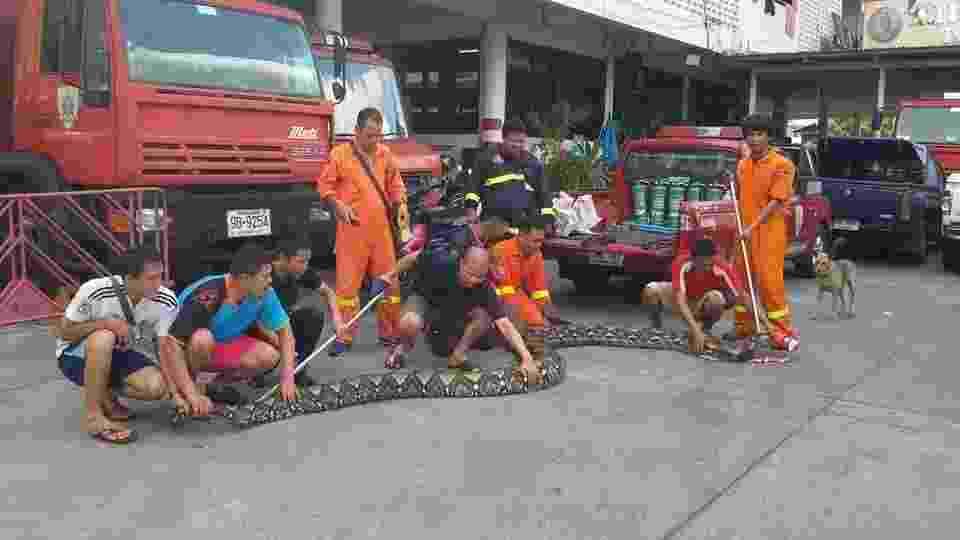 24.ago.2015 - Uma cobra de quase oito metros foi encontrada próximo a um restaurante em Thonburi, Bancoc, Tailândia. A serpente píton-reticulada de quase 200 quilos foi recolhida por uma equipe de 17 bombeiros - Reprodução/Facebook/Corpo de Bombeiros