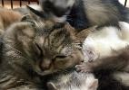 Gatinha é criada em meio a furões e acredita que é um deles - Reprodução/Twitter/@Garo004giru