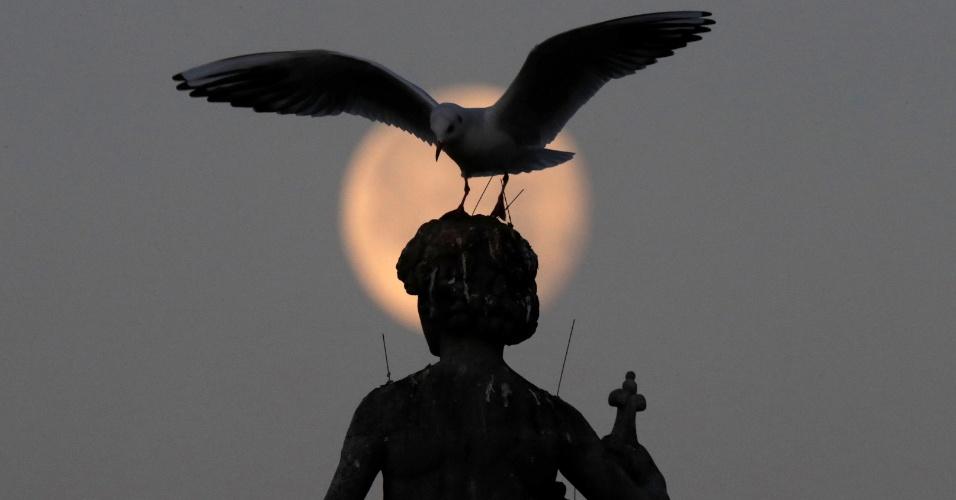 15.dez.2016 - Lua é vista atrás de gaivota em estátua nos jardins de Luxembourg em Paris (França)