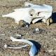 Sertão nordestino enfrenta sua pior seca em um século - Evaristo Sá/AFP