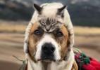 Gato e cachorro viram