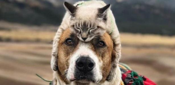 Henry e Baloo, ambos adotados, formam dupla inusitada, acompanhando seus donos em caminhadas e escaladas por paisagens montanhosas; suas fotos juntos ganharam milhares de fãs nas redes sociais
